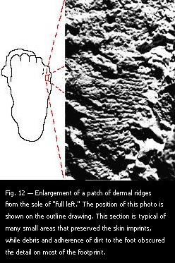 "Fig. 12 — Enlargement of a patch of dermal ridges from the sole of ""full left."""