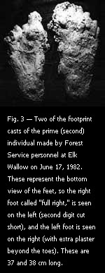 Fig. 3 — Two of the footprint casts of the prime (second) individual made by Forest Service personnel at Elk Wallow on June 17, 1982.