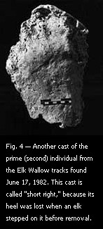 Fig. 4 — Another cast of the prime (second) individual from the Elk Wallow tracks found June 17, 1982.