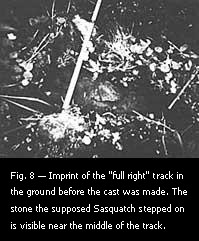 "Fig. 8 — Imprint of the ""full right"" track in the ground before the cast was made."