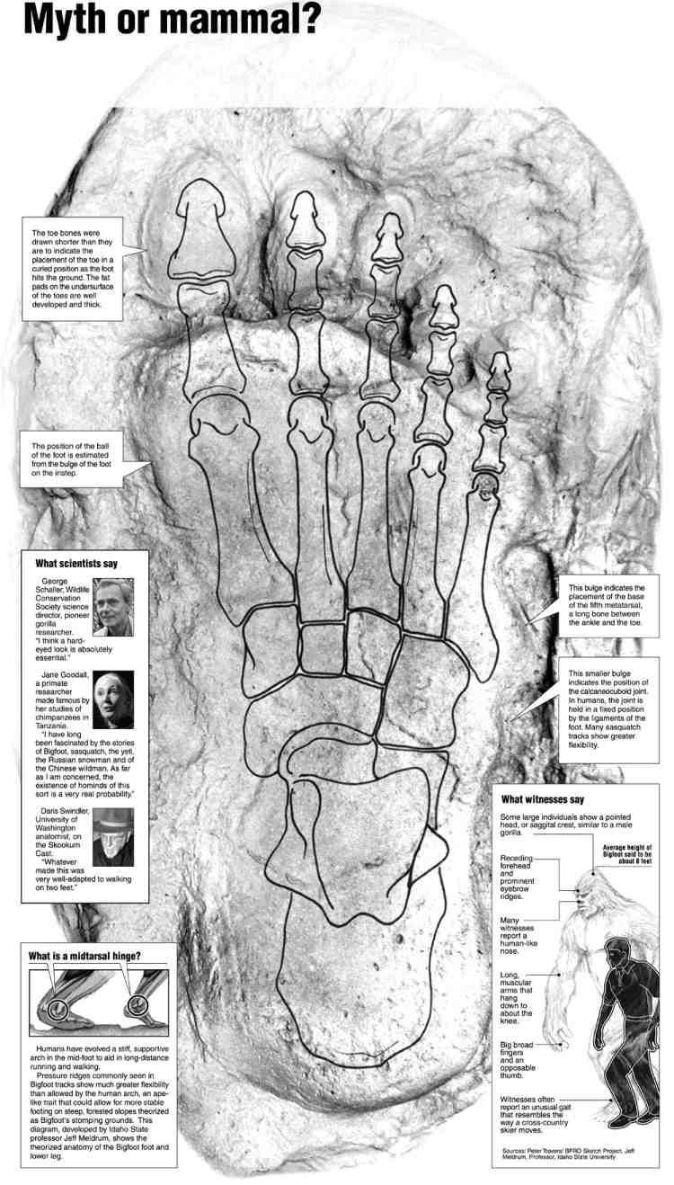 Bigfoot Believers