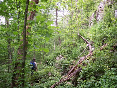 Wildlife biologist Alton Higgins hikes the rugged but lush terrain of Area X in June 2006.
