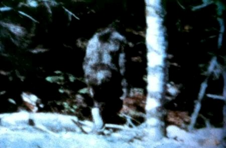 A frame from the Patterson-Gimlin footage, filmed in October 1967 in northern California. Critics say it was faked; proponents say there's no way it was faked. Every attempt to prove it was a hoax or recreate it has been unsuccessful.