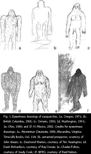 Observer sketches of sasquatches.