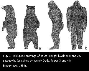 Comparison of black bear and sasquatch.