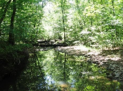 The creek area where Brandon Lentz and Tim Sievert heard rock-clacking and huff-barks, similar to gorilla huff-barks.